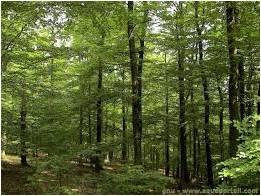 Journée forêt